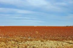 Paisagem do campo do algodão Foto de Stock Royalty Free