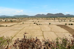 Paisagem do campo do arroz do campo Fotos de Stock Royalty Free
