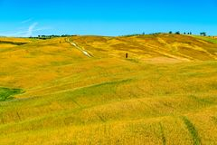 Paisagem do campo montanhoso bonito de Toscânia no verão imagem de stock