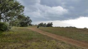 Paisagem do campo no dia chuvoso ventoso do verão vídeos de arquivo