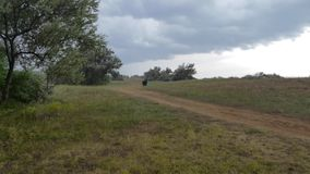 Paisagem do campo no dia chuvoso ventoso do verão video estoque