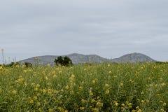 Paisagem do castelo e da flor de Montgrà fotografia de stock