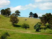 Paisagem do cavalo e da montanha Foto de Stock Royalty Free