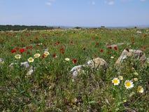 Paisagem do Cretan na primavera Fotografia de Stock Royalty Free