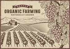 Paisagem do cultivo orgânico das uvas ilustração do vetor