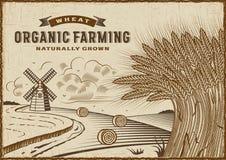 Paisagem do cultivo orgânico do trigo ilustração royalty free