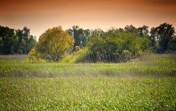 Paisagem do delta de Danúbio Foto de Stock Royalty Free