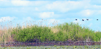 Paisagem do delta de Danúbio Fotos de Stock Royalty Free