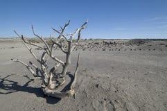 Paisagem do deserto foto de stock royalty free