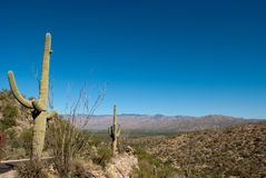 Paisagem do deserto Imagem de Stock