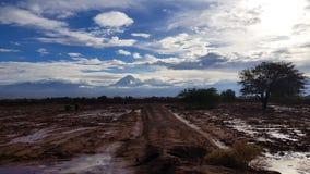A paisagem do deserto de Atacama inundou após uma tempestade severa, o Chile imagens de stock