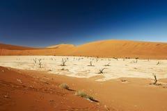 Paisagem do deserto de Namib em Deadvlei Fotos de Stock Royalty Free