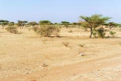 Paisagem do deserto de Sahara perto de Khartoum em Sudão Imagens de Stock Royalty Free