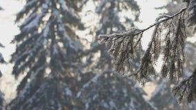 Paisagem do dia de inverno vídeos de arquivo