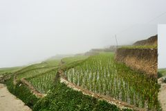 Paisagem do Fogy de Ricefields no valey do sapa de chai do lao em Vietname Sapa, Vietnam - 22 mai 2019 imagem de stock