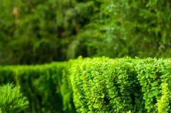 paisagem do início do verão, parque velho, árvores, arbustos, grama verde, folhas verde-clara fotografia de stock