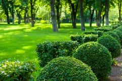 paisagem do início do verão, parque velho, árvores, arbustos, grama verde, folhas verde-clara foto de stock royalty free