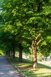 paisagem do início do verão, parque velho, árvores, arbustos, grama verde, folhas verde-clara imagens de stock