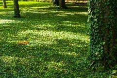 paisagem do início do verão, parque velho, árvores, arbustos, grama verde, folhas verde-clara imagem de stock