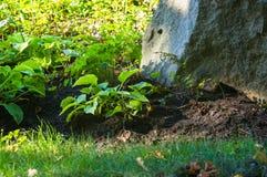 paisagem do início do verão, parque velho, árvores, arbustos, grama verde, folhas verde-clara imagem de stock royalty free