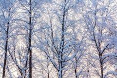 Paisagem do inverno - árvores cobertos de neve ao longo da estrada nos raios do por do sol imagens de stock