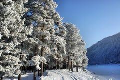 Paisagem do inverno. Árvores com neve e hoarfrost Fotos de Stock Royalty Free