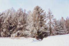 Paisagem do inverno, árvores geadas foto de stock royalty free
