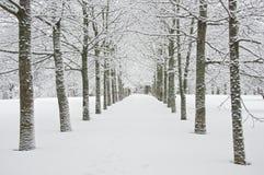paisagem do inverno. Foto de Stock