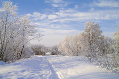 Paisagem do inverno. Imagens de Stock Royalty Free