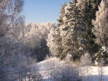 Paisagem do inverno foto de stock royalty free