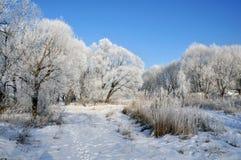 Paisagem do inverno imagens de stock