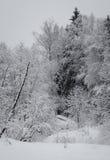 Paisagem do inverno Imagem de Stock Royalty Free