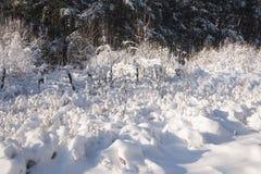 Paisagem do inverno Imagens de Stock Royalty Free