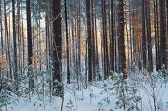Paisagem do inverno Cena do inverno Fotos de Stock Royalty Free