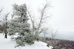 Paisagem do inverno coberta com a neve Fotos de Stock