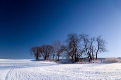 Paisagem do inverno com árvores Foto de Stock