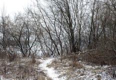 Paisagem do inverno com árvores imagem de stock royalty free