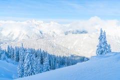 Paisagem do inverno com árvores cobertos de neve e cumes em Seefeld, Áustria fotografia de stock royalty free