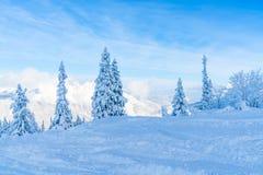 Paisagem do inverno com árvores cobertos de neve e cumes em Seefeld, Áustria imagem de stock royalty free