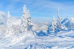 Paisagem do inverno com árvores cobertos de neve e cumes em Seefeld, Áustria fotos de stock