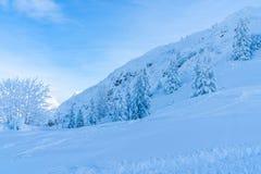 Paisagem do inverno com árvores cobertos de neve e cumes em Seefeld, Áustria imagem de stock