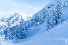 Paisagem do inverno com árvores cobertos de neve e cumes em Seefeld, Áustria foto de stock royalty free