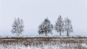 Paisagem do inverno com árvores desencapadas Fotos de Stock Royalty Free
