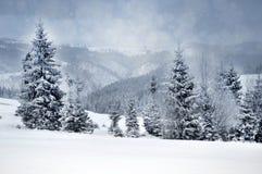 Paisagem do inverno com árvores nevado e flocos de neve Foto de Stock Royalty Free