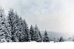 Paisagem do inverno com árvores nevado e flocos de neve Fotos de Stock Royalty Free