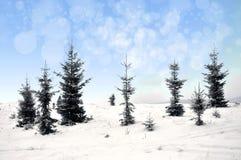 Paisagem do inverno com árvores nevado e flocos de neve Fotografia de Stock Royalty Free