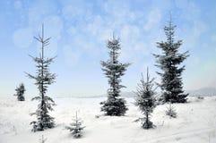 Paisagem do inverno com árvores nevado e flocos de neve Imagem de Stock