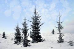 Paisagem do inverno com árvores nevado e flocos de neve Fotografia de Stock