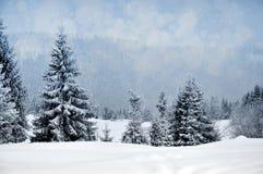 Paisagem do inverno com árvores nevado e flocos de neve Fotos de Stock