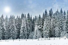 Paisagem do inverno com árvores nevado e flocos de neve, Natal concentrado Foto de Stock